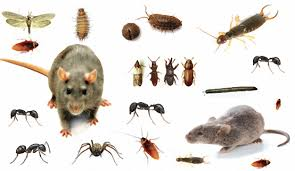 شركة مكافحة حشرات بمحايل عسير0553141080