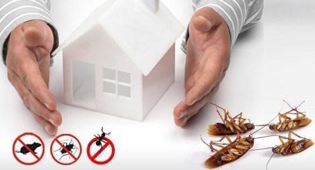 شركة مكافحة حشرات بالنماص 0553141080 اتصل بنا الان